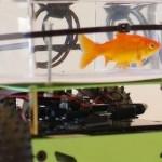 Smart Fish Tank