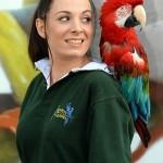 Parrot Macau