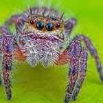 Spiders could eat every human within a year