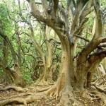 794765-tree-1492437289-208-640x480