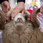 Sacrificial Animals Guide and Prayer