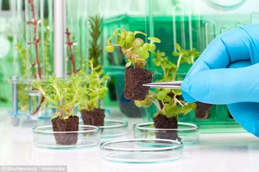 America Has Planned To Prepare Spy Plants
