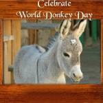Miss Donkey Beauty Contest 2014