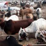 Congo Fever Cases in Pakistan On Eid